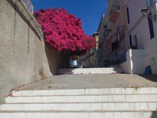 mitsegeln Sardinien und Korsika Reisebericht