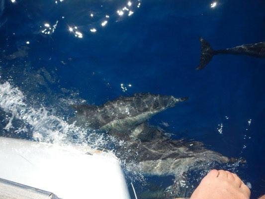 freundliche Begleiter schwimmen mit der JOJO