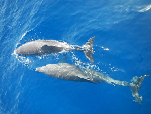 Delfine begleiten uns ab und zu