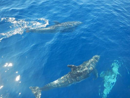 Define sehen auf dem Segeltörn von Mallorca nach Mallaga