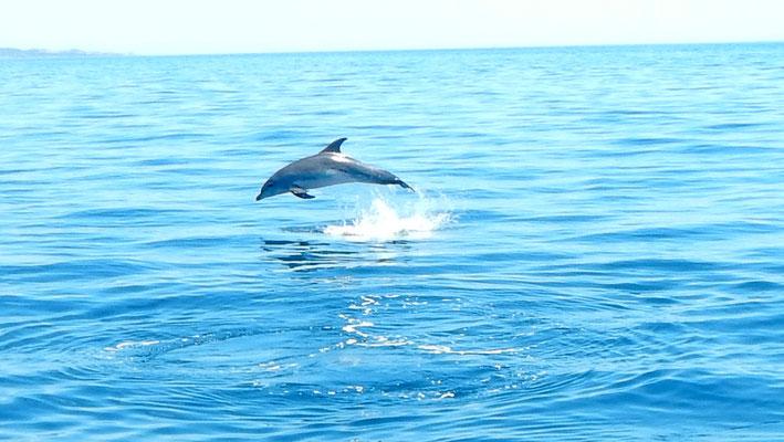 Einen Delfin im Sprung