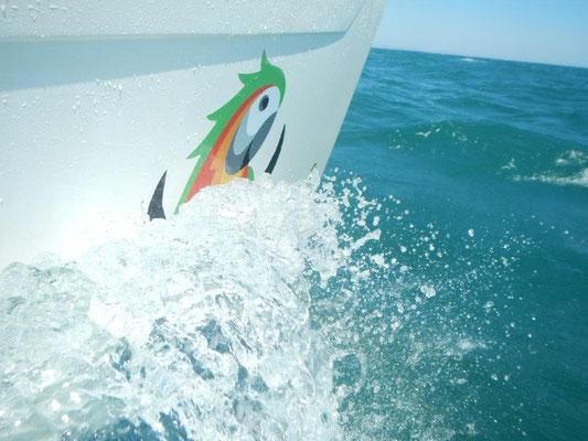 Viagempirata ist wieder unterwegs. Die JOJO vom Atlantik ins Mittelmeer.