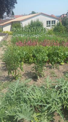 Gemüse Schaubeete