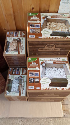 Champignon Bio-Pilzzucht-Boxen
