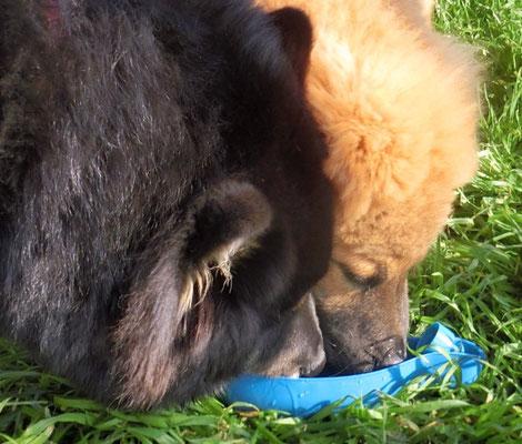 Bia & Aslan trinken gemeinsam