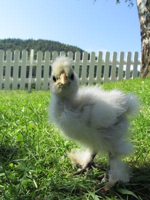 little Pistorius