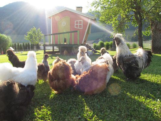 Hühnerhaufen 2015