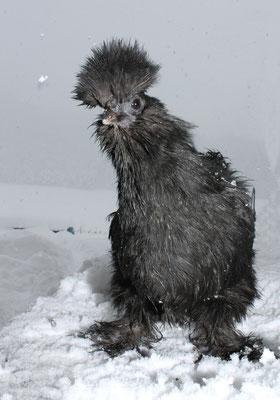 ...igitt..Schnee!...