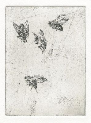 Vroni Schwegler, vier Fliegen, Strichätzung, 9,5x7,0 cm