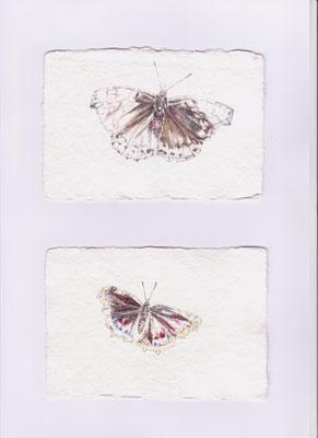 ADMIRAL, TRAUERMANTEL, Mirjam, Aquarell, Bleistift 30,0 x 40,0 cm