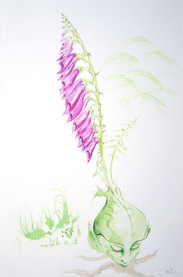 Die zweite Hexenblume; Martin Welzel 2018; Aquarell/Farbstifte auf Aquarellpapier; 45 x 30 cm