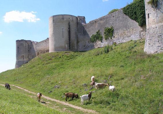 Les enfants aiment rencontrer les chèvres en contrebas des remparts de Coucy le Château