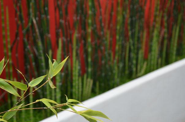 Bambous (Phylostachis nigra) et préle (Equicetum hiemale)