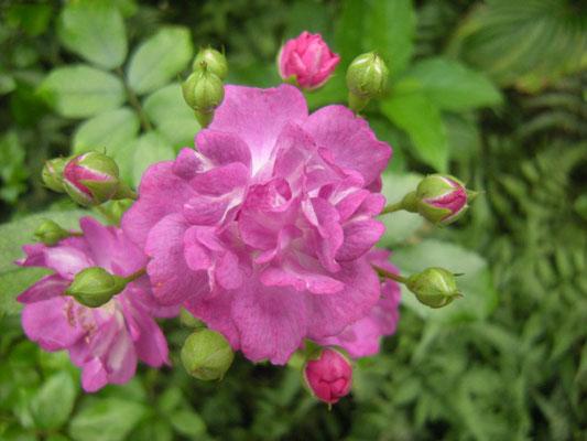 小紫 河合伸志 2010年
