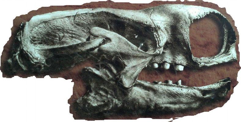 Squelette de  découvert dans la grotte