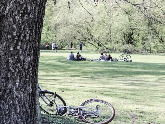Grünfläche im Bürgerpark. ©Daniel Zaidan/dezettgrafik
