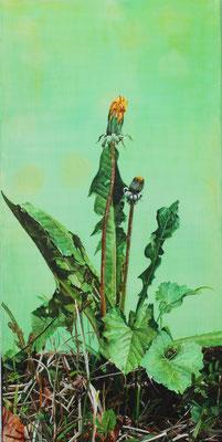 3-er Serie, gleiche Pflanze im Abstand von 10 Tagen: 40x80cm