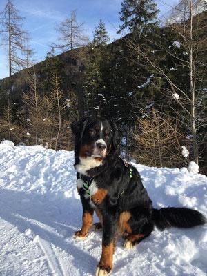 Anouk im Schnee