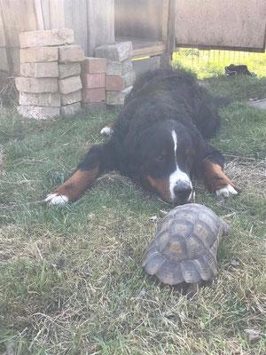 1. Treffen von Theo und seinem Freund nach dem Winterschlaf
