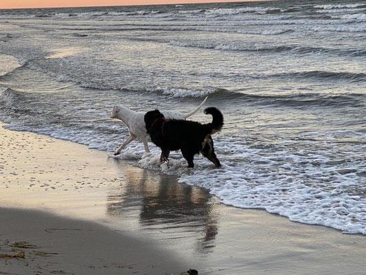 Aljoscha zum ersten Mal am Meer