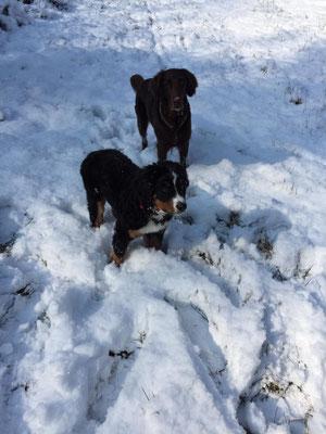 Theo und Nelly im Schnee