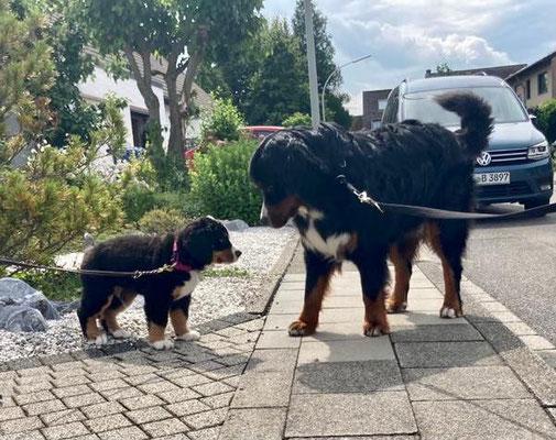 Odin und Beon