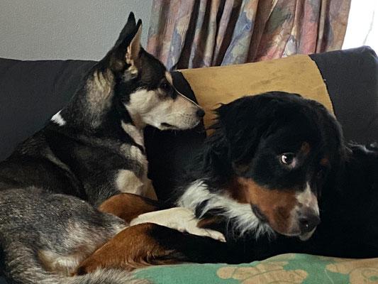 Beon und sein Freund beim chillen
