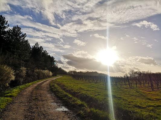 Durch die Weinberge der Dordogne