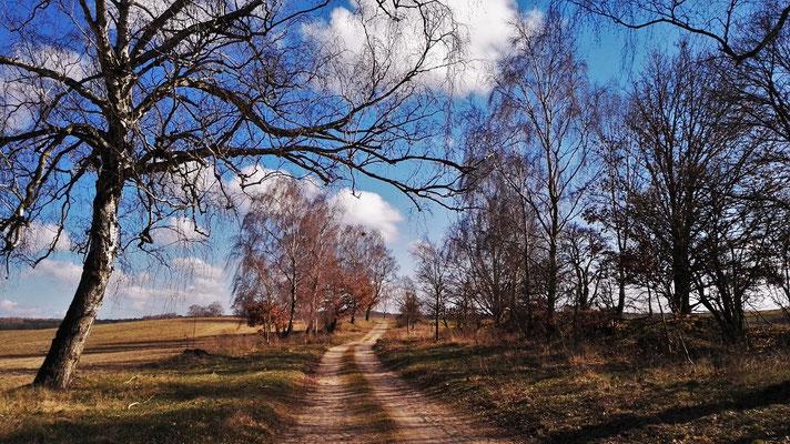 Feldweg nahe Rheinsberg / Brandenburg