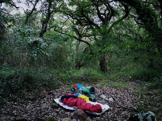 Schlafplatz im Korkeichenwald