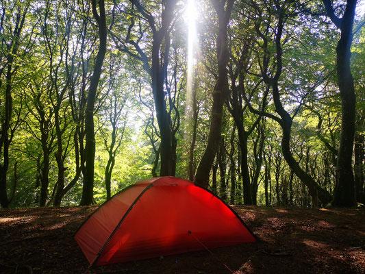 Im Rold Skov, einem der größten Wälder Dänemarks