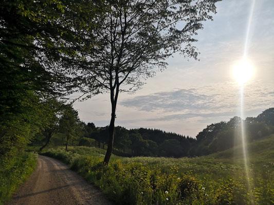 Wanderweg im Süden Dänemarks