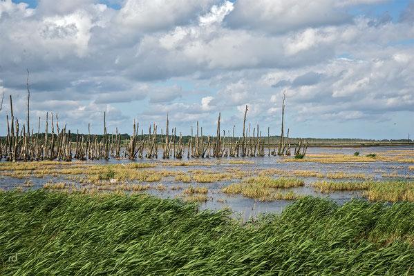 das Achterwasser auf Usedom ist eine Lagune des in die Ostsee mündenden Peenestroms