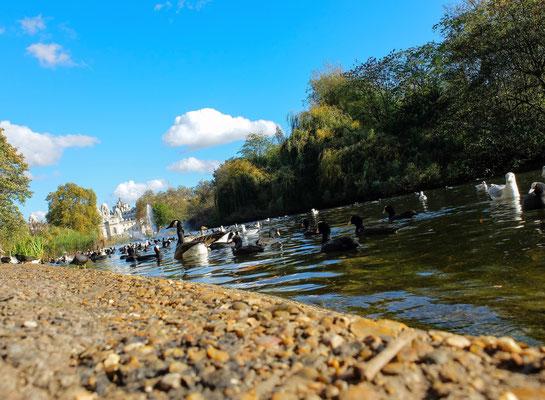 Londres - Parc Saint James