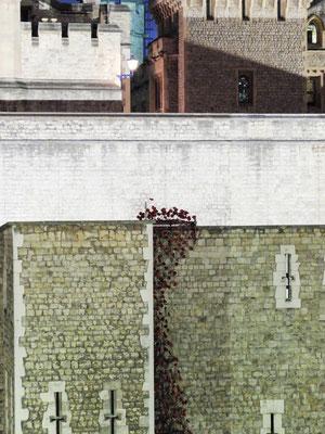 Londres - Poppies