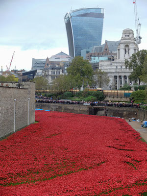Londres - Poppies