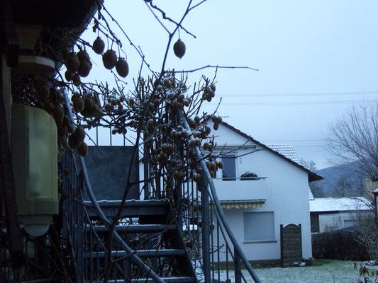 Kiwi im Schnee