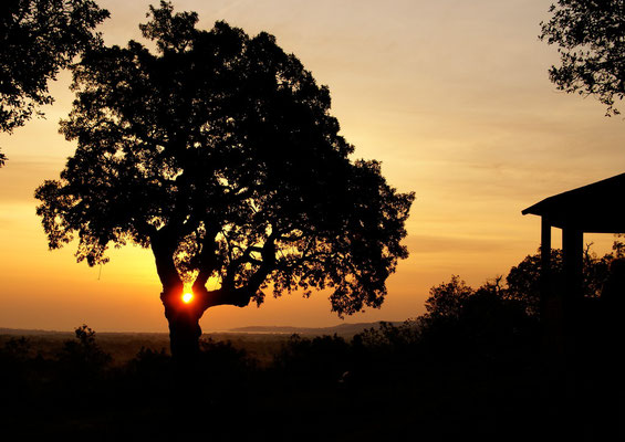 Lever du soleil, Cogolin, France