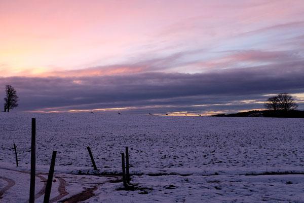 Chevreuils au crépuscule, Valanvron février 2014