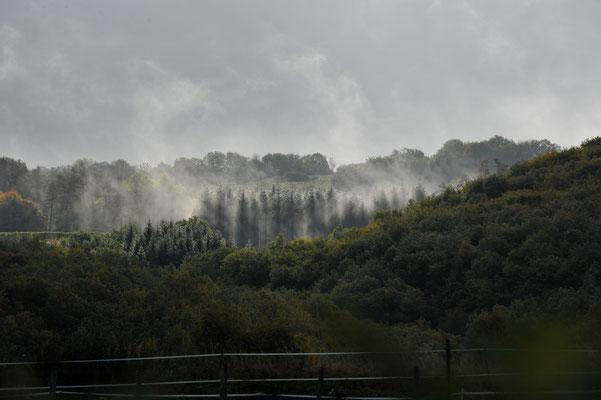 Auvergne, 2011