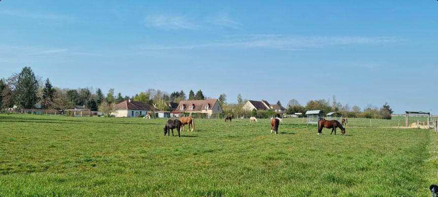 De grands prés pour les chevaux