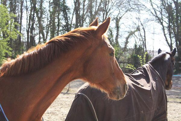 Ecurie des 2R, pension pour chevaux