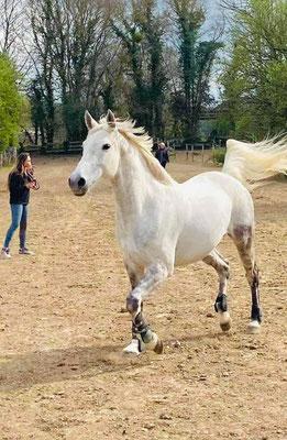 Des chevaux heureux au paddock