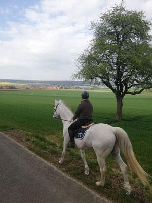 Balade à cheval sur les hauteurs de Thorigny