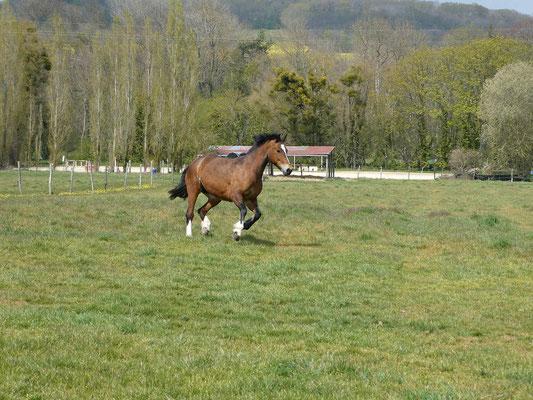 De grands prés où les chevaux vivent sous surveillance 7 mois de l'année