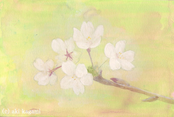 「桜(試作)」水彩紙/アクリル/ハガキサイズ