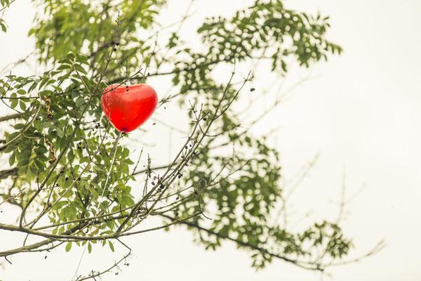 Brautpaar, freie Trauung, Zeremonie, Luftballons, Baum, Herzen, Altes Fährhaus Cranz, Hamburg, minalux, wedding photography, Hochzeitsreportage, Hochzeitsfotografie, Mina Esfandiari