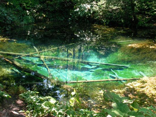 斜里町。神の子池 神秘の池です