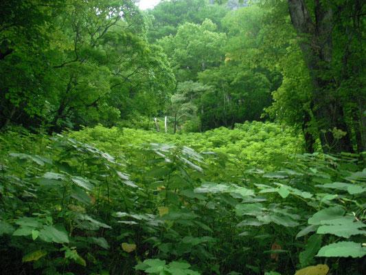 東川町。羽衣の滝付近の森