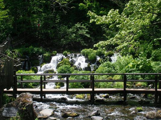 京極町。ふきだし公園 羊蹄山の湧水